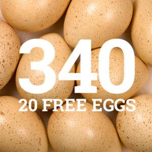 Rosebud Chukar Farm - Chukar Eggs